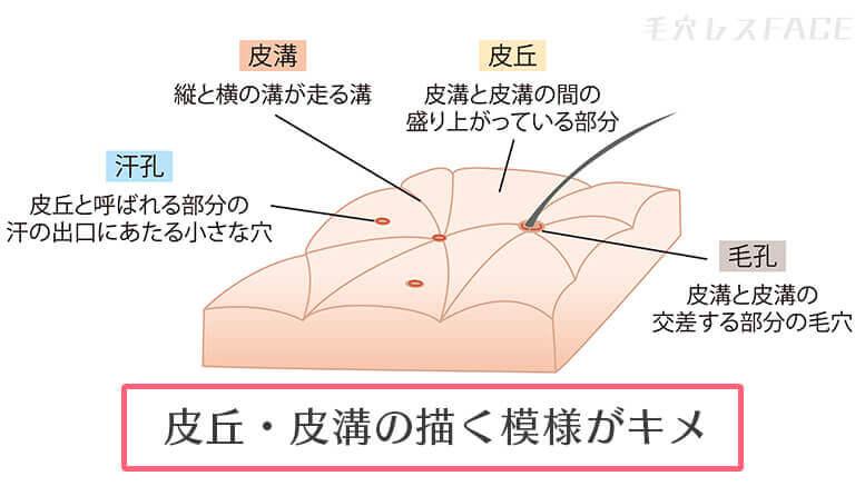 肌のキメの図解